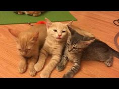 Mama Kitty Nursing and Weaning Her Cute Kittens! - YouTube