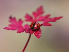http://www.thedphoto.com/inspiration-fix/macro-still-life-photography-by-ellen-van-deelen/