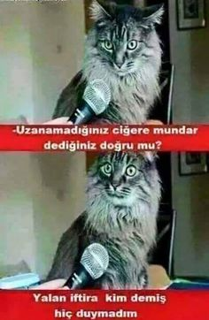Voi come state? Funny Video Memes, Funny Jokes, Funny Images, Funny Photos, Funny Cats, Funny Animals, Funny Happy, Jokes Quotes, Bad Timing