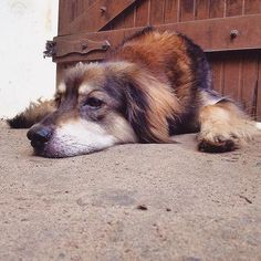 Lobo having a rest and dreaming of the fun weekend ahead! #dog #dogs #dogsofinstagram #instadog #animal #doglover #dogstagram #ilovemydog #love #peace #nature #natureza #instanature #naturelover #mothernature #brazil #wanderlust #travel #retreat #yoga #meditation #goodvibes #happy #healing #relaxing #positive #retreatbelanatureza #naturelovers #therapydog #sun