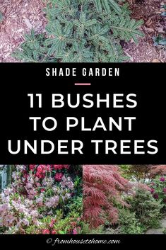 Find out which bushes to plant under trees in the shade garden in your backyard or front yard. These shrubs will help to brighten up your yard. #fromhousetohome #bushes #shade #gardeningtips #gardening #gardenideas Shade Loving Shrubs, Shade Shrubs, Shade Garden Plants, Shade Perennials, Garden Trees, Garden Bed, Hill Garden, Garden Benches, Summer Plants