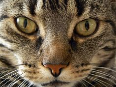 """""""Nosse"""" the cat, 17 years old - Pixdaus"""