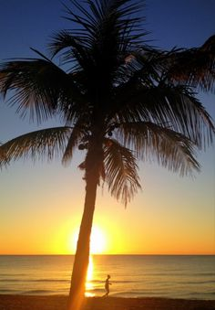 She walks by the water's edge. Palm tree watches over.
