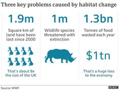 Wildlife in 'catastrophic decline' due to human destruction, scientists warn - BBC News Earth Summit, Convention On Biological Diversity, Path Of Destruction, Paris Climate, Environmental Education, World Leaders, Bbc News, Habitats, Scientists