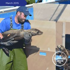 As of today, SeaWorld San Diego has rescued a total of 475 marine mammals since Jan. 1. This sets a new record for the number of rescues in a single year. Read more on our blog: http://bit.ly/1F5xBgT #365DaysOfRescue