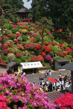 Reminds me of Augusta during Masters Week!  Azalea Festival, Shiofune Kannon-JI Temple, Tokyo, Japan