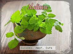 Melissa ou Erva-Cidreira