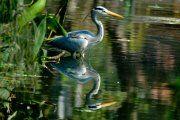 Photo shoot at the Durban Botanical Gardens by Dries Erasmus. Classic Portraits, Kwazulu Natal, Wild Birds, Botanical Gardens, Photo Shoot, Southern, Africa, Animals, Photoshoot
