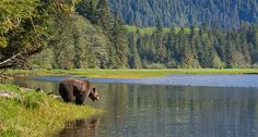 Have you been to Northern BC yet? It's BC's largest region (and larger than California!) and it's full of outdoor adventure (with all that much space, no wonder). We suggest dusting off the paddles, rods and hiking boots in NBC this summer: http://www.100bcmoments.com/trip-idea/outdoor-adventures-in-northern-bc/?utm_campaign=ss2013_medium=socialmedia_source=pinterest Photo by Kelly Funk.