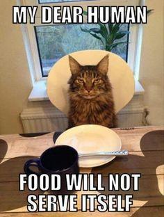 Cher humain...La nourriture ne va pas se servir toute seule!