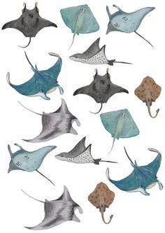 sea rays - so beautiful