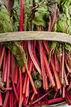 Pickled Swiss Chard recipe. There is some sugar in the recipe but I wonder if enough ends up in the pickle itself? Maybe this recipe could be adapted somehow, other pickle recipes don't use sugar.