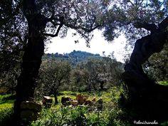 Ελένη Τράνακα: Μπελούσι, (Κυψέλη) - Ζάκυνθος / Belushi (Kypseli) - Zakynthos