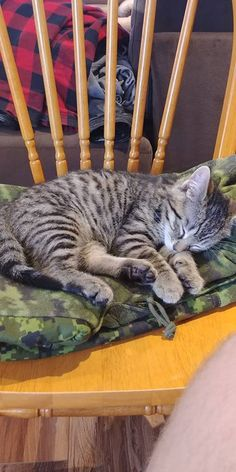 Tabby Cats Found him in a box in the forest I couldnt say no. Everyone meet MeatLoaf! Hello there bright people. Cat Having Kittens, Kittens Cutest, Cats And Kittens, Tabby Cats, I Love Cats, Cool Cats, Baby Animals, Cute Animals, Cat Sketch