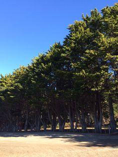 Evergreens.