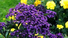 Plants, Vanilla, Exotic Plants, Ornamental Plants, Floral, Balcony, Learning, Plant, Planting