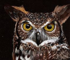 Owl pencil drawing on black paper. Easy Drawings, Pencil Drawings, Animal Close Up, Black Paper Drawing, Ap Studio Art, Paper Artwork, Art Studios, Pet Portraits, Colored Pencils