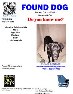 Found Dog - Labrador Retriever - Lilburn, GA, United States