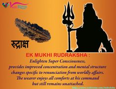 One 1 Mukhi Rudraksha Beads used for meditation purpose it is best to Destroys All sins in wearers life.