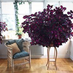House Plants Decor, Cactus Decor, Plant Decor, Jungle Flowers, Apartment Plants, China Rose, Growing Gardens, Garden Planner, Garden Terrarium