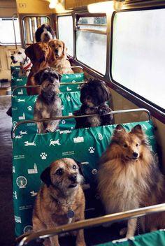 Primer autobús para perros del mundo