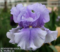 TB Iris germanica 'Jennifer Stout' (Mullin, 2010)