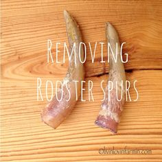 Removing Rooster Spurs Tutorial with a youtube video with #livinlovinfarmin.com Raising chickens on the homestead.