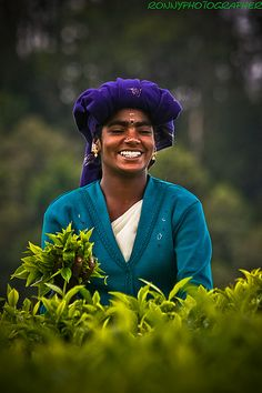 women at work pick tea leaves in the fields near ooty-tamil nadu-south india