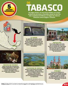 De origen olmeca, #Tabasco es uno de los estados con mayor producción de cacao y chocolate, posee los 2 ríos más caudalosos de México y es hogar de criaturas silvestres como el jaguar. Conócelo. #InfografíaNTX