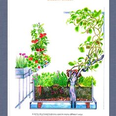 1000 images about permaculture sur balcon on pinterest permaculture how to grow tomatoes and. Black Bedroom Furniture Sets. Home Design Ideas