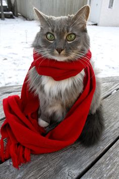the red scarf really brings out those gorgeous eyes!