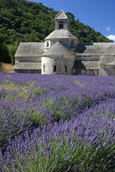 Lavender Field Provence - growing lavender, such an amazing herb! Lavender Fields, Lavender Flowers, Love Flowers, Lavender Care, Lavender Plants, Planting Lavender, Lavander, Beautiful Flowers, Outdoor Plants