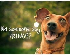 Hahaha, Happy Friday <3 re-pinned by www.StoneArtUSA.com ~ affordable custom pet memorials for everyone