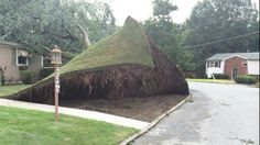 Viral Randomness… Now here's something we don't see everyday. An entire lawn nicely intact after being pulled up by a tree. This tree falling and pulling the whole lawn with it re… Tree Felling, Funny Memes, Hilarious, Funny Quotes, Perfectly Timed Photos, Doja Cat, Autumn Trees, Laughing So Hard, Laugh Out Loud