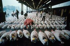 'Japan, Tokyo, Chuo Ward, vendors with tuna at Tsukiji Fish Market' by Rich Iwasaki / Photographer's Choice / Getty