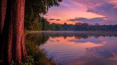 thick tree reddish sky lake reflection wide hd wallpaper