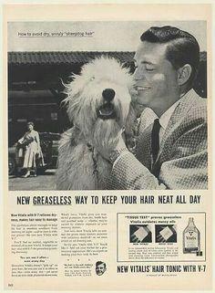 Vintage Old English Sheepdog ad