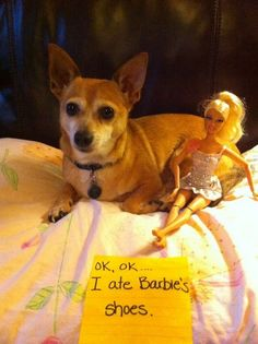 Dog Shaming features the most hilarious, most shameful, and never-before-seen doggie misdeeds. Join us by sharing in the shaming and laughing as Dog Shaming reminds us that unconditional love goes both ways. Animals And Pets, Funny Animals, Cute Animals, Animal Funnies, Funny Animal Pictures, Dog Pictures, Cat Shaming, Dog Stories, Funny Dogs