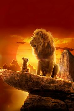 Lion King Fan Art, Lion King Movie, Lion Art, Disney Lion King, Cute Cat Wallpaper, Lion Wallpaper, Cute Disney Wallpaper, Animal Wallpaper, Lion King Pictures