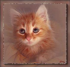 Анимационные открытки Кошки, коты, котята. Анимационные картинки в формате gif для гостевых книг и блогов с кодами