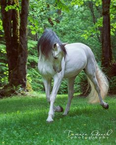 Exquisite. This is a pretty little whit horse with grey mane prancing through the very green grass and forest. Almost fairy tale looking. Lovely!