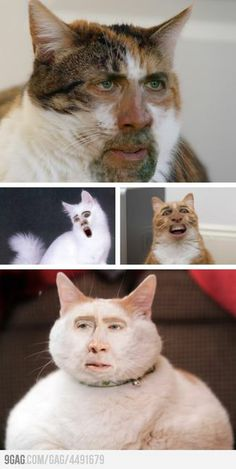 Cage Cat Face-Swap ~~ I just cackled like a crazy person!