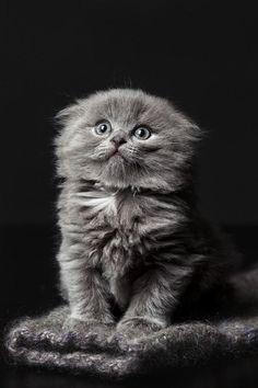 *Ohhh Noooo please don't look at me like that I didn't do it honestttttttt. I Love you mommy
