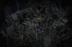 TINE POPPE PHOTOGRAPHY