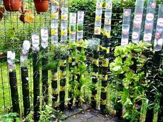 Five Ways to Grow Edibles Vertically | Permaculture Magazine -school garden-for covering brick walls?