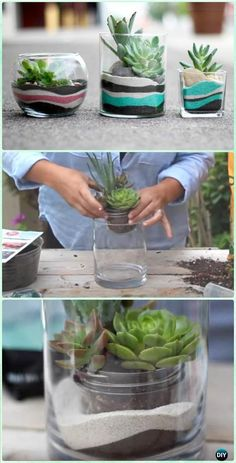 DIY Layered Sand Succulent Planter Terrarium Instruction - DIY Sand Art Terririum Ideas Projects & Tutorials DIY Sand Art Terririum Ideas Projects & Instructions: Layered Sand Terrarium, Beach Themed, Dessert Themed Terrarium, Sand Succulent or Zen Garden Succulent Gardening, Container Gardening, Gardening Tips, Succulent Planters, Succulent Ideas, Organic Gardening, Indoor Gardening, Garden Planters, Hanging Planters