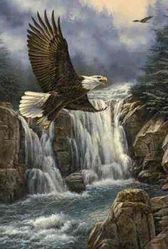 """Majestic Flight-Bald Eagle"" by Rosemary Millette"