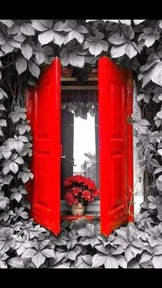 Cute red shutters on the windows! Red Shutters, Window Shutters, Window View, Through The Window, Window Boxes, Windows And Doors, Red Doors, Red Windows, Architecture