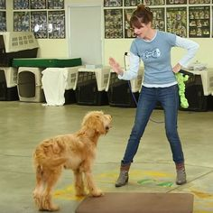 Victoria Stilwell shows you a game to use with your dog or puppy to help teach them self-control and boundaries.