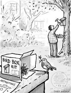Gardening cartoon: nesting box for a robin